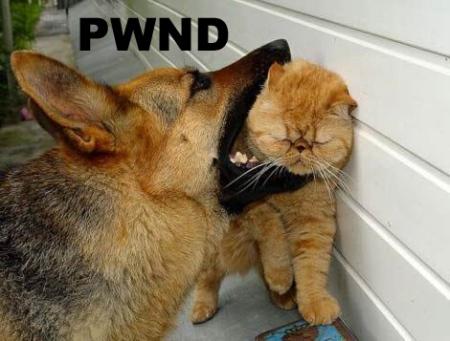 cats = evil