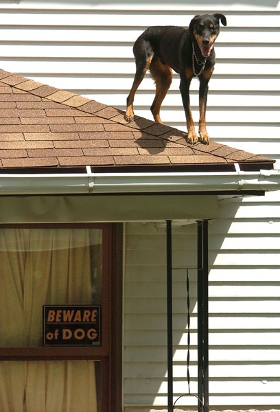 get down from there dog, your a dog you don't belong up there