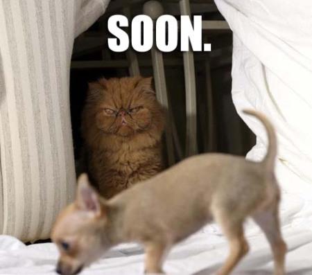 plotting....